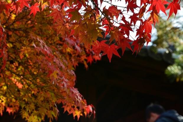 tofuku4.jpg